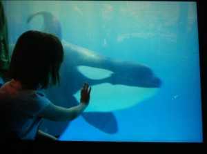 Lucy at Seaworld